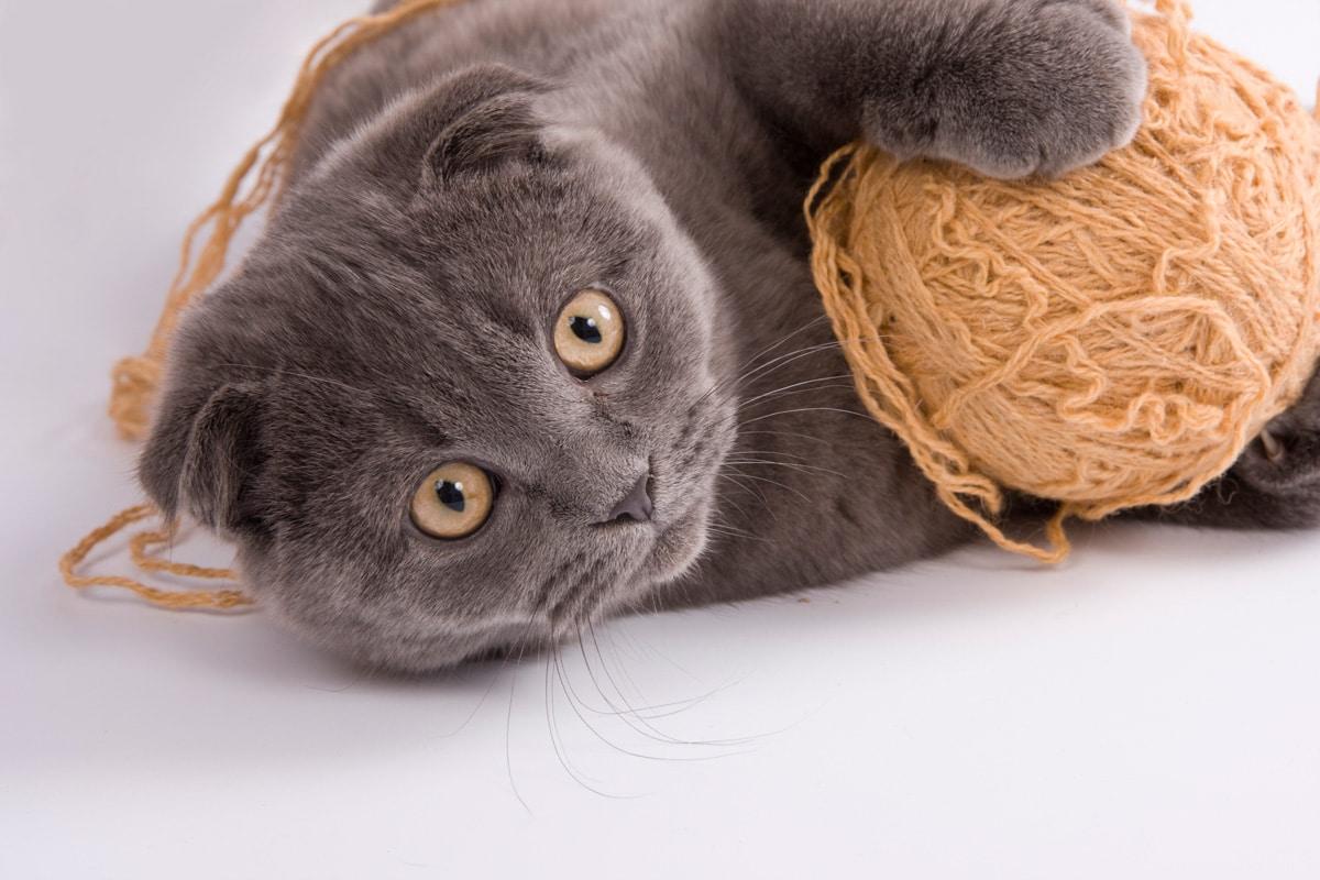 garde chat joueur avec laine